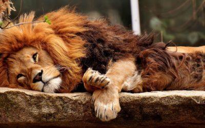 Søvn – fakta og gode råd